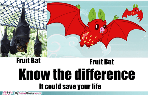 fruit bat,know the difference,rainbow