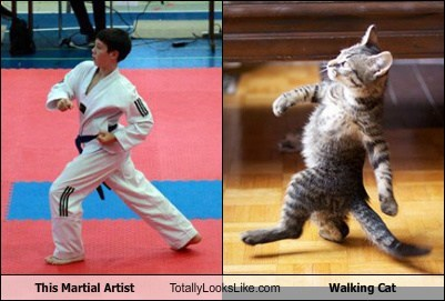 This Martial Artist Totally Looks Like Walking Cat