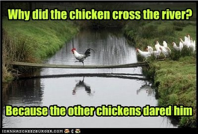 roosters,river,crossing,plank,dare,chickens