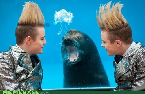 Jedward,homophobic seal,musicians