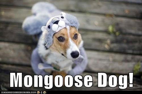 Mongoose Dog!