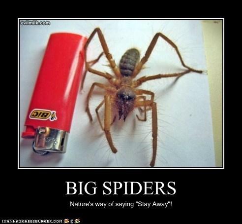 BIG SPIDERS