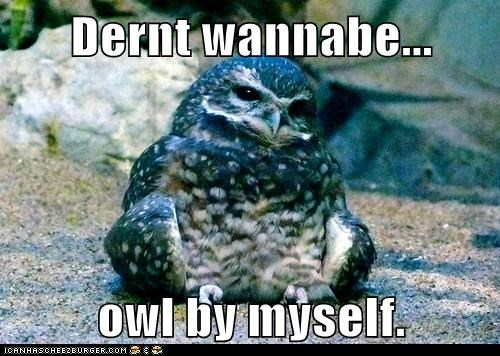 Dernt wannabe...  owl by myself.