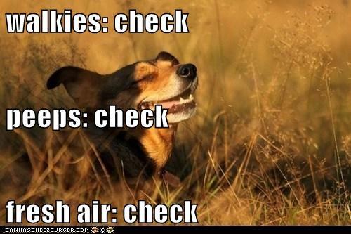 walkies: check peeps: check fresh air: check