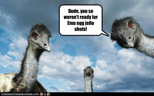 emus,Staring,drunk,passed out,egg,jello shots,fell