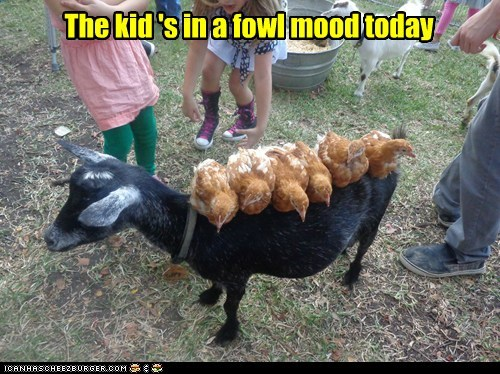 foul,fowl,kids,goats,puns,carrying,chickens