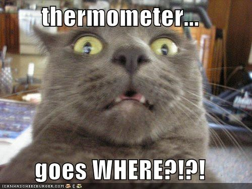 thermometer...  goes WHERE?!?!