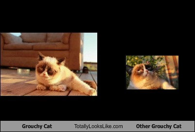 Grouchy Cat Totally Looks Like Other Grouchy Cat