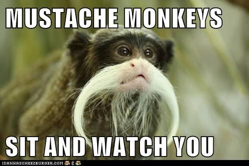 MUSTACHE MONKEYS  SIT AND WATCH YOU