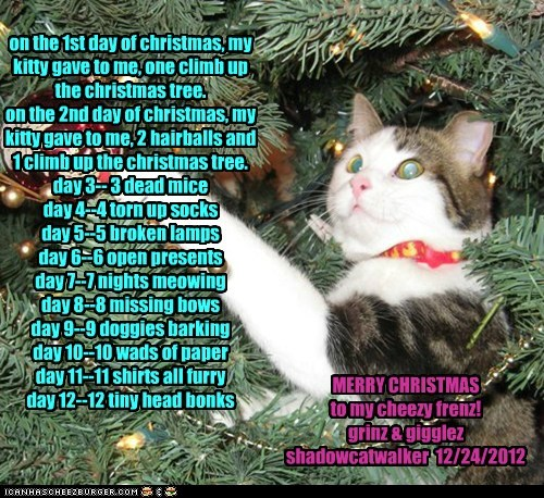 kitty's 12 daze of christmas