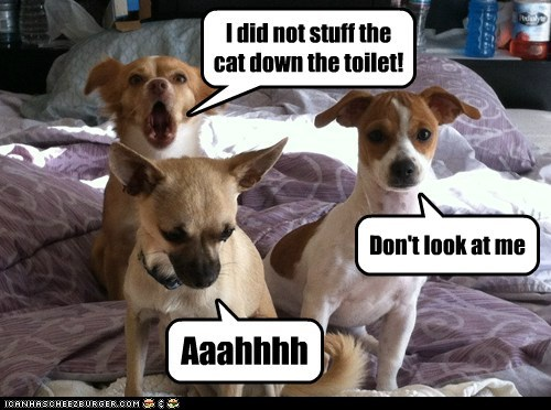 I did not stuff the cat down the toilet!