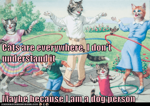 Cats are everywhere, I don't understand it Maybe because I am a dog person