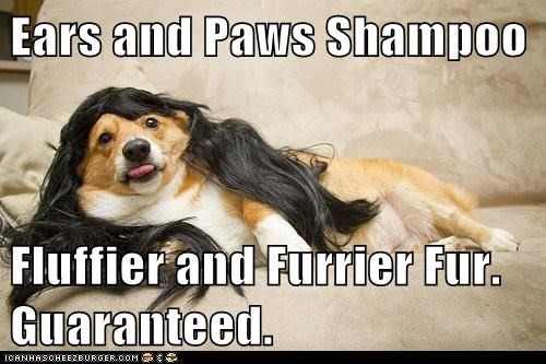 hair,dogs,long hair,Fluffy,wig,corgi,shampoo
