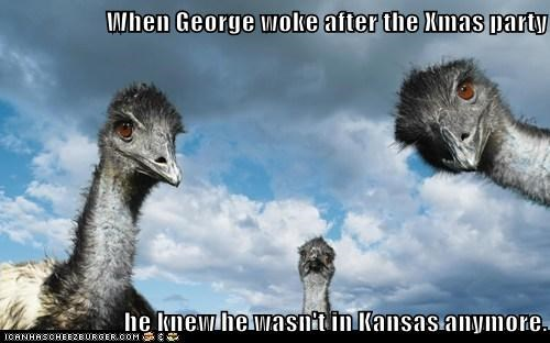When George woke after the Xmas party  he knew he wasn't in Kansas anymore.
