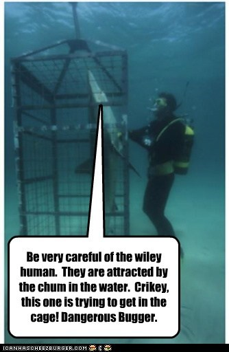 water,human,cage,sharks,jaques cousteau,documentary,role reversal