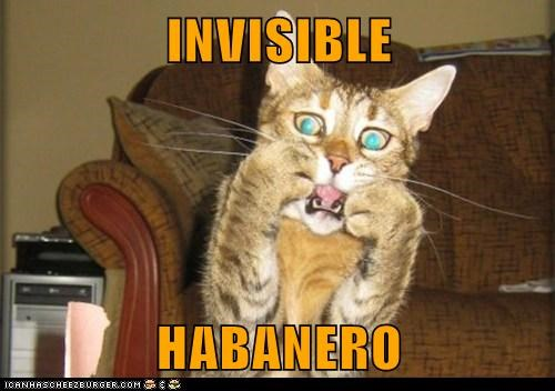 INVISIBLE  HABANERO