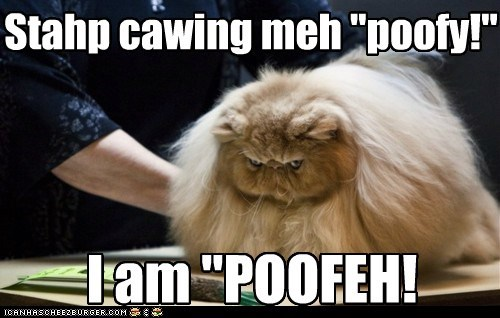 Cats R nawt Poofy. Dey R Poofeh!