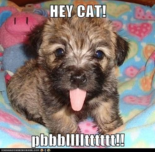 HEY CAT!  pbbblllltttttt!!