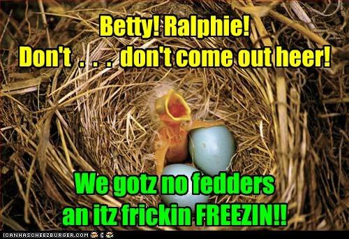 warning,freezing,birds,baby birds,feathers,hatched,dont