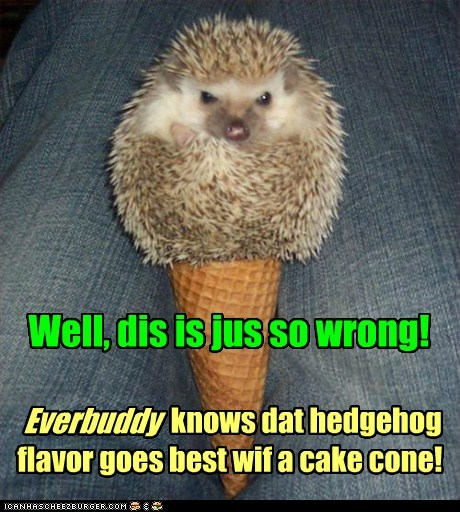 cones,ice cream,angry,hedgehogs,what were you thinking,wrongs