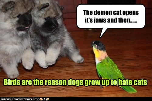 Birds are the reason dogs grow up to hate cats