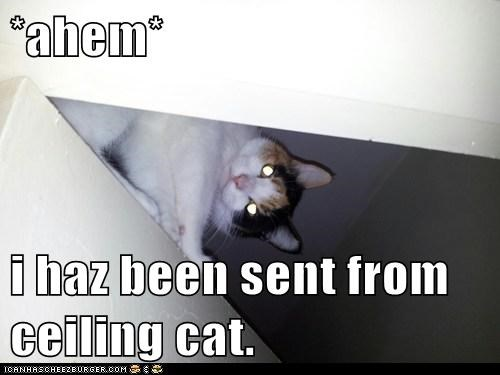 *ahem*  i haz been sent from ceiling cat.