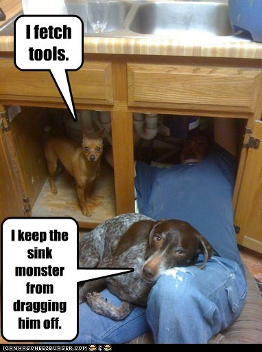 dogs,plumber,sink,helpers,kitchen,what breed,helping,monster