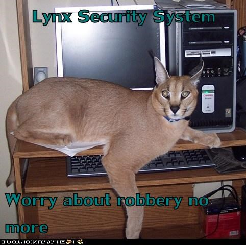 scary,worry,security system,computer,effective,robbery,caracal cats,lynxes
