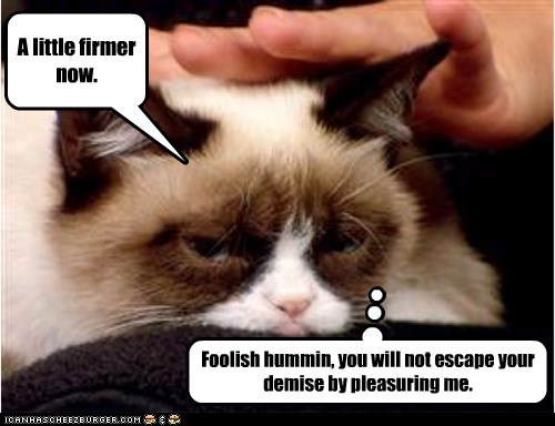 Grumpy Cat enjoys a massage before getting down to business.