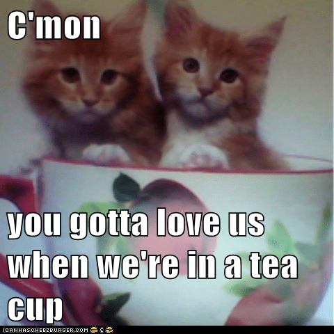 C'mon  you gotta love us when we're in a tea cup