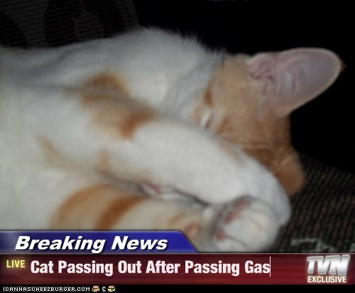 Breaking News - Cat Passing Out After Passing Gas