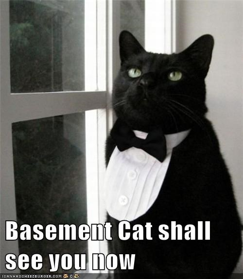 Basement Cat shall see you now