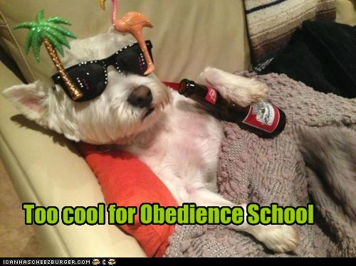 cool,beer,dogs,sunglasses,obedience school,drop out,too cool for school,what breed