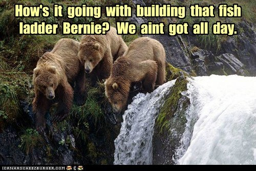 How's  it  going  with  building  that  fish  ladder  Bernie?   We  aint  got  all  day.