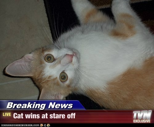 Breaking News - Cat wins at stare off