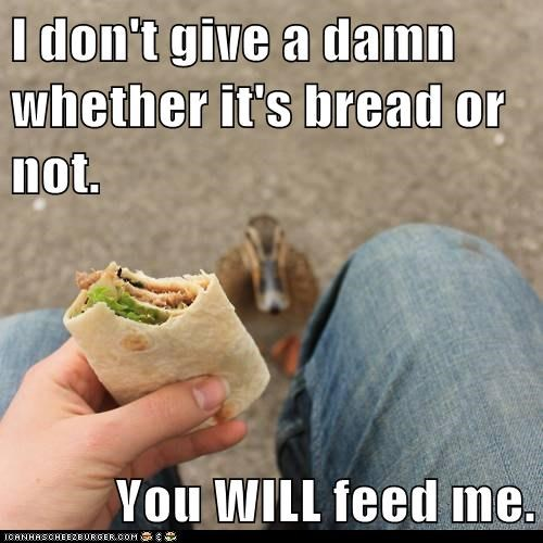 Staring,wrap,waiting,feed me,ducks,bread,eating