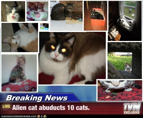Breaking News - Alien cat abuducts 10 cats.