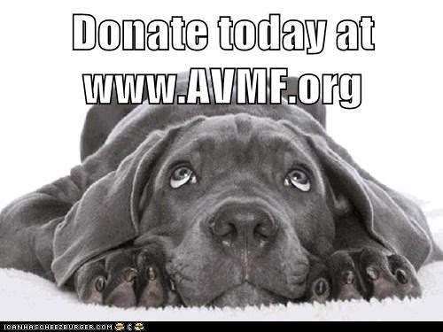 Donate today at www.AVMF.org