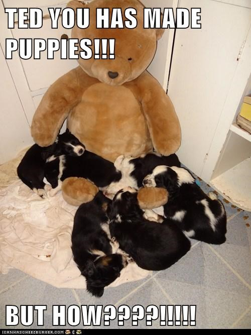 TED YOU HAS MADE PUPPIES!!!  BUT HOW????!!!!!
