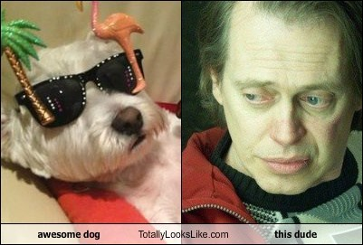 awesome dog Totally Looks Like this dude