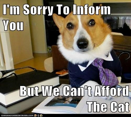 I'm Sorry To Inform You  But We Can't Afford The Cat