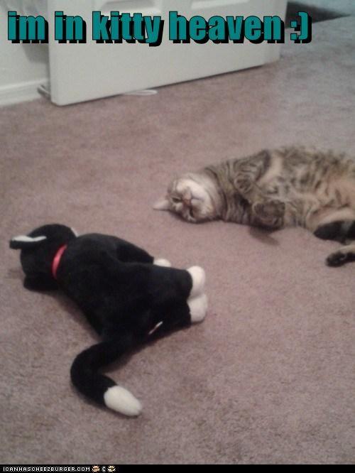 im in kitty heaven :)
