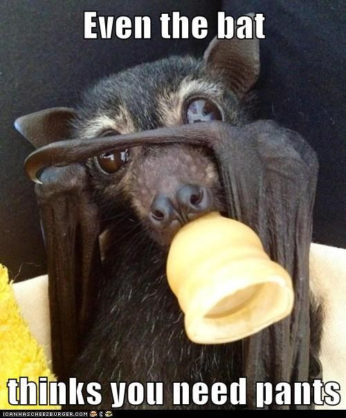 Even the bat  thinks you need pants
