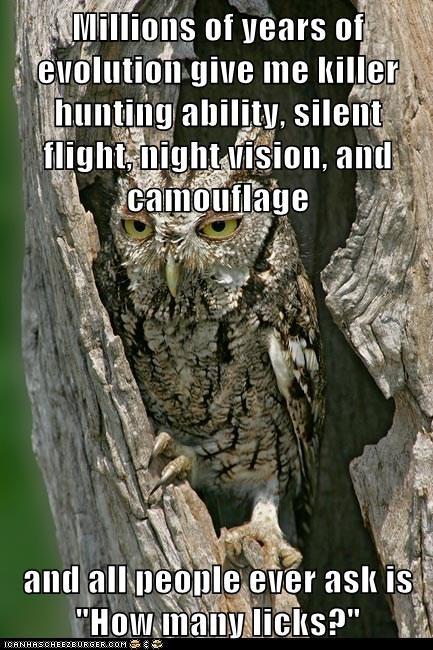 annoyed,camouflage,night vision,evolution,owls,how many licks