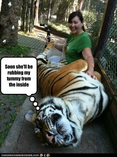 petting,inside,eating people,tummy,tigers,rubbing,happy