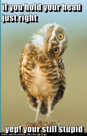 head tilt,owls,insult,still,stupid
