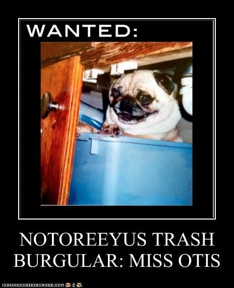 NOTOREEYUS TRASH BURGULAR: MISS OTIS