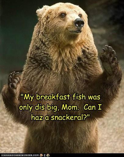 hungry,breakfast,snack,bears,fish,mom