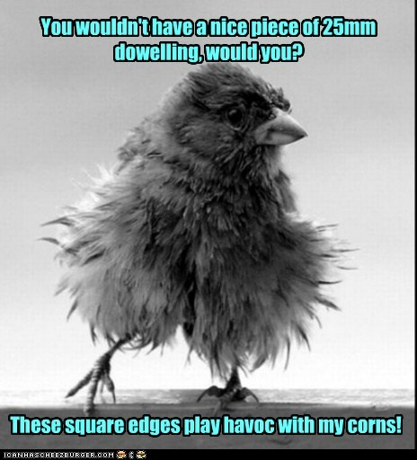 perch,birds,baby birds,doweling,corns,uncomfortable