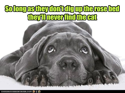 So long as they don't dig up the rose bed they'll never find the cat
